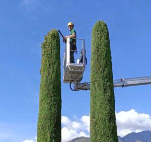 taglio alberi alto fusto