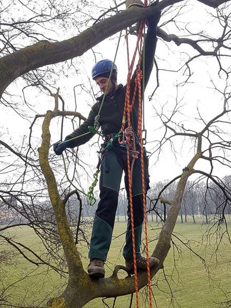 lavori in quota con tree climbing