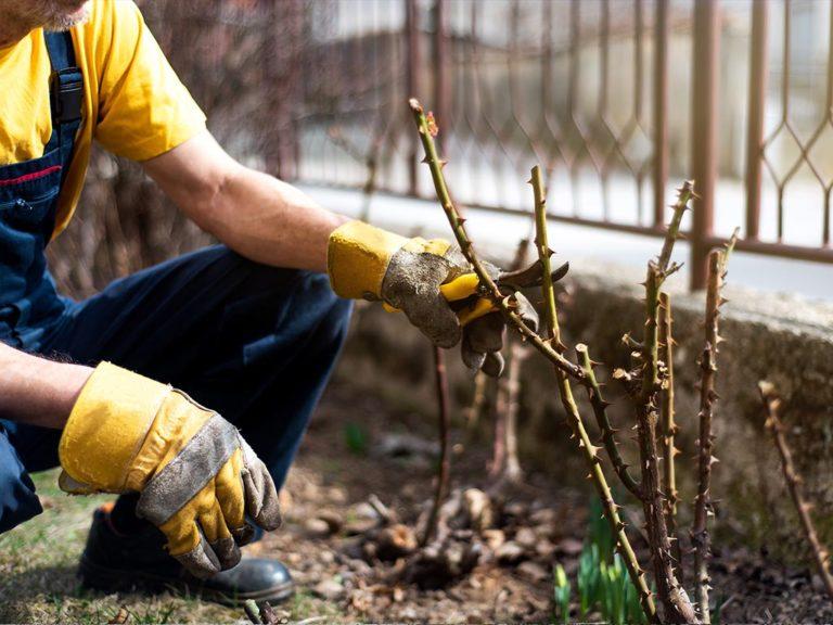 lavori giardino in febbraio