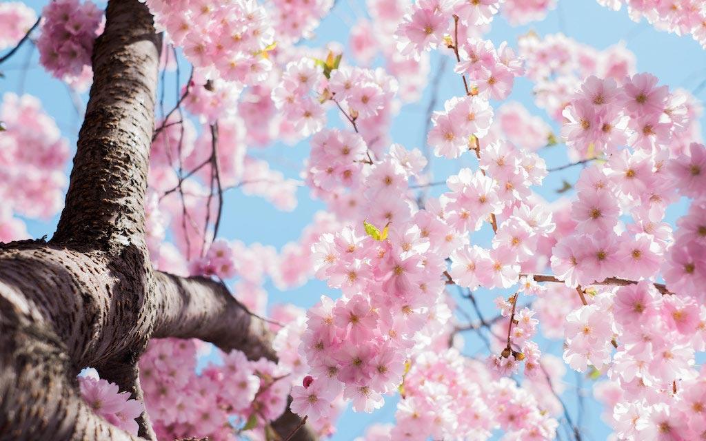 Marzo é il mese della Primavera