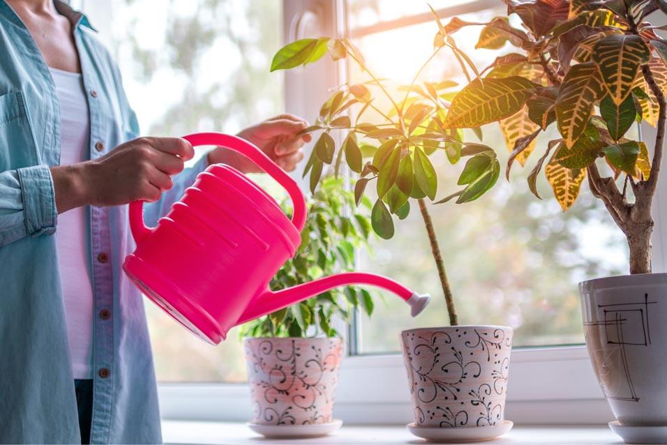 dobbiamo bagnare le piante in inverno?